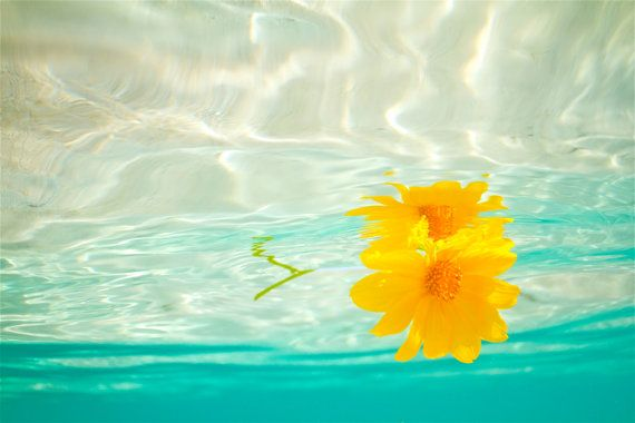 Yellow Daisy Underwater by PatrickVieiraPhotos on Etsy