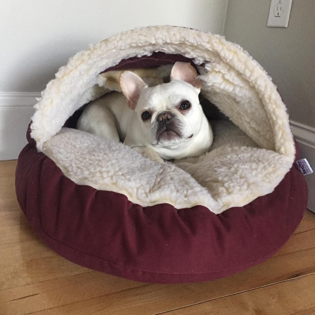 Snuggle Bed French Bulldog Puppy Care Animals Beautiful