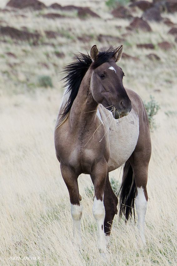 Wild Horses by KEN ARCHER http://kenarcherphotos.com/