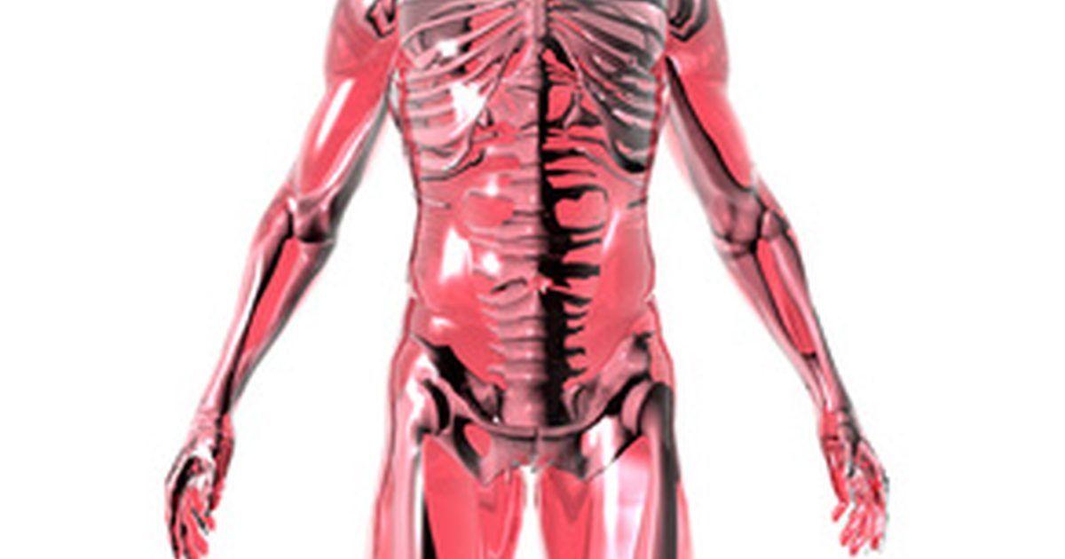 Atractivo Anatomía Y Fisiología Consejos Para Estudiar Elaboración ...