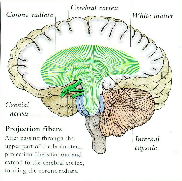 Cortex Suomeksi