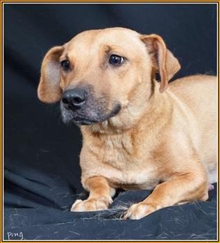 02 11 14 Garnet Basset Hound Mix Young Female Medium Houston Spca Houston Tx Basset Hound Mix Dog Adoption Dogs