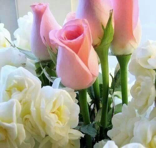 Blanca y rosa