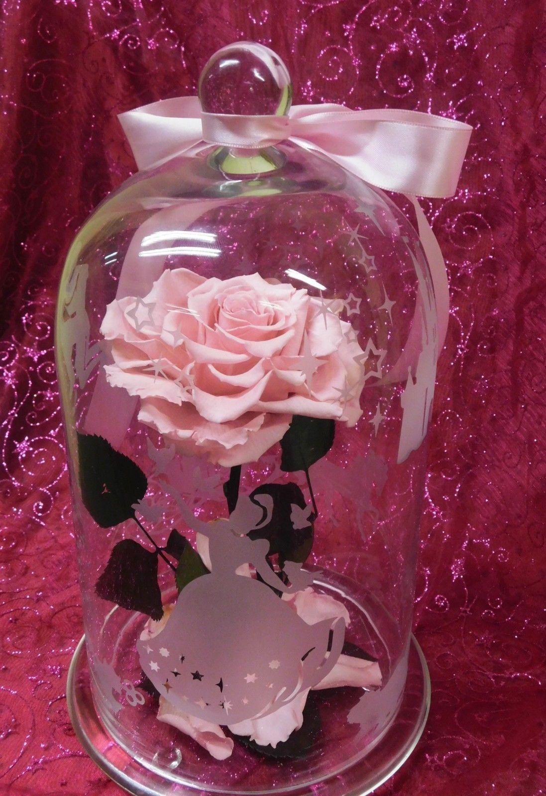 Rose Rose Naturel Eternelle Stabilise Sous Cloche Verre H31cm Theme