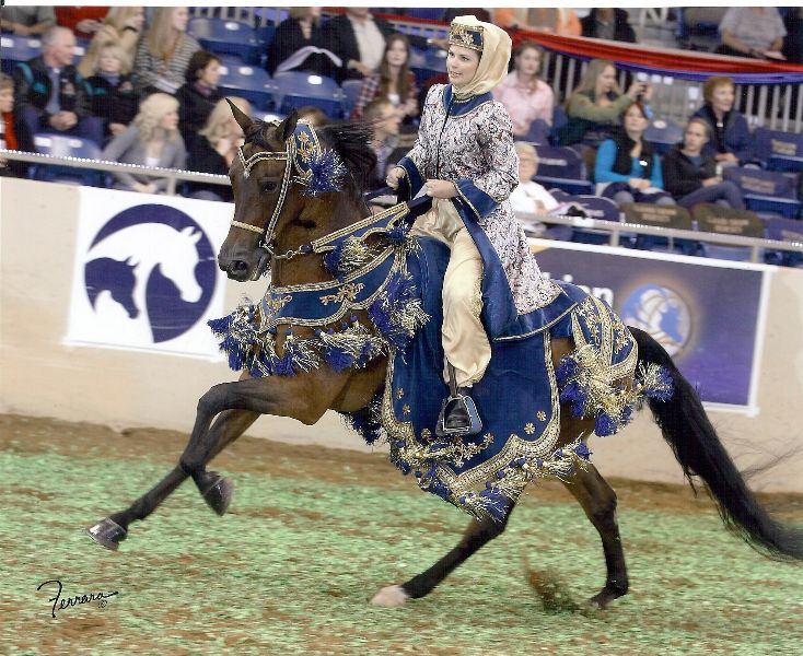 Pin By Malissa Lamar On Crista Lambert Arabian Horse Costume Horse Costumes Arabian Horse