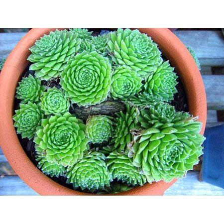Keeping your pets safe 10 non toxic house plants aspca for Easy houseplants safe for pets