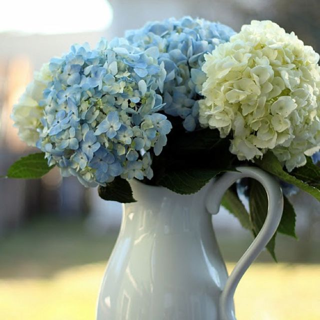 Hydrangea jug happiness pinterest hydrangea wedding and weddings beautiful hydrangeas in a pitcher mightylinksfo