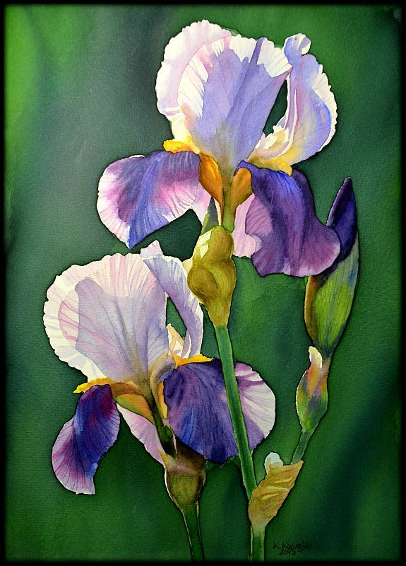 Irysy Szukaj W Google Iris Painting Watercolor Flowers