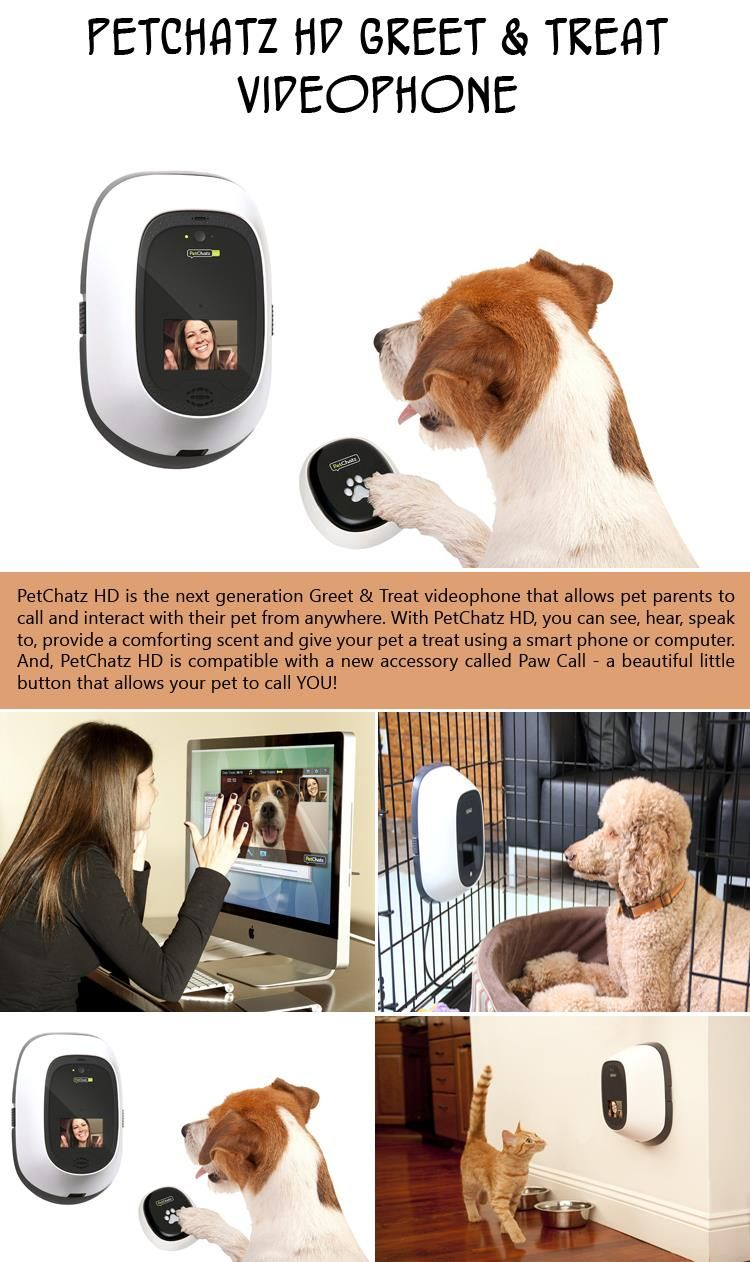 Is Your Dog Ready For Summer 10 Pics Dog Gadgets Your Dog Pets