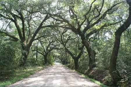 Edisto Island, SC one of our favorite places to go!