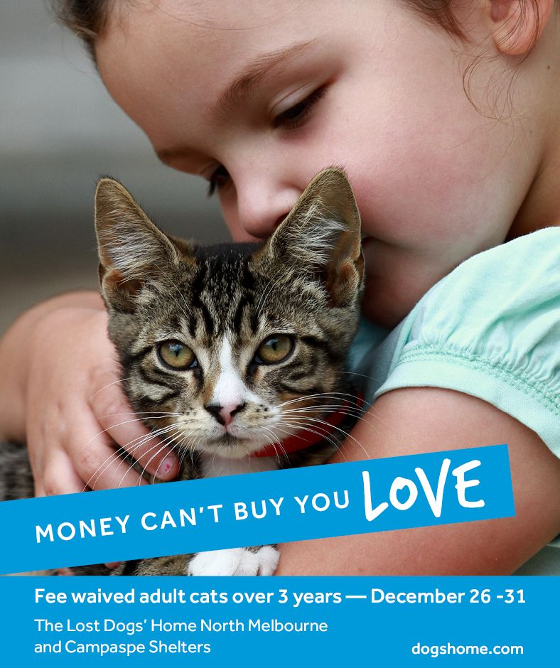 Updated Fee Waived Adult Cat Adoption Drive Starts On Boxing Day
