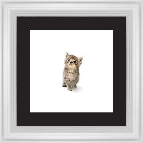 Kitten Framed Print, White, Classic, Black, Black, Single piece, 12 x 12 inches