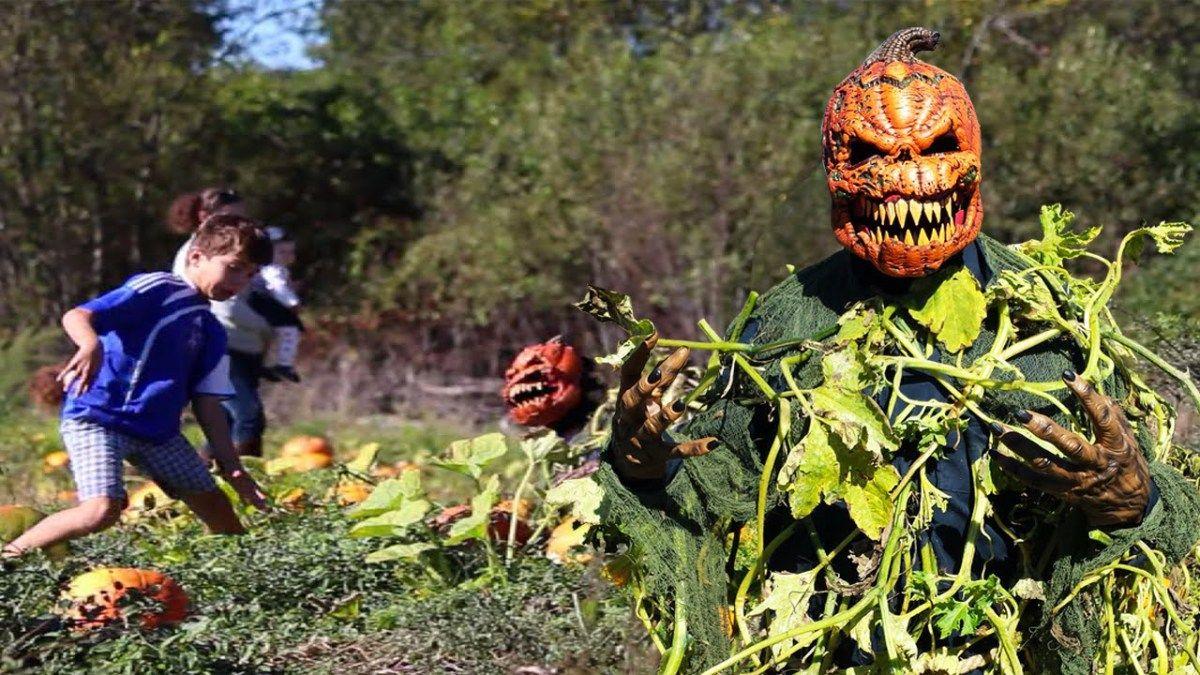 pumpkin patch killer halloween scare prank - funny prank - funny