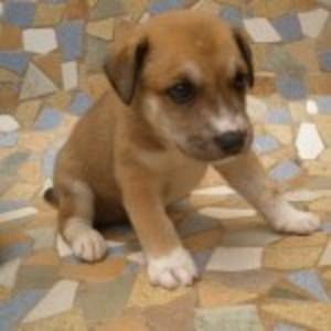 Pawsitive Match Dog Adopt A Thon February 25 Pet Dogs Puppies Puppies For Sale Pet Dogs