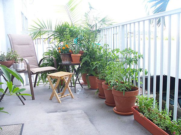 Balcony Gardens Prove No Space Is Too Small For Plants | In the ...