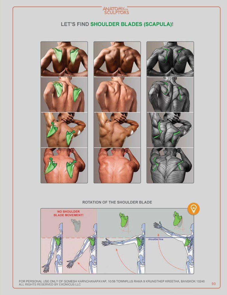 Иванка Флорьянович | 肉体 | Pinterest | Anatomía, Dibujo y Anatomia ...