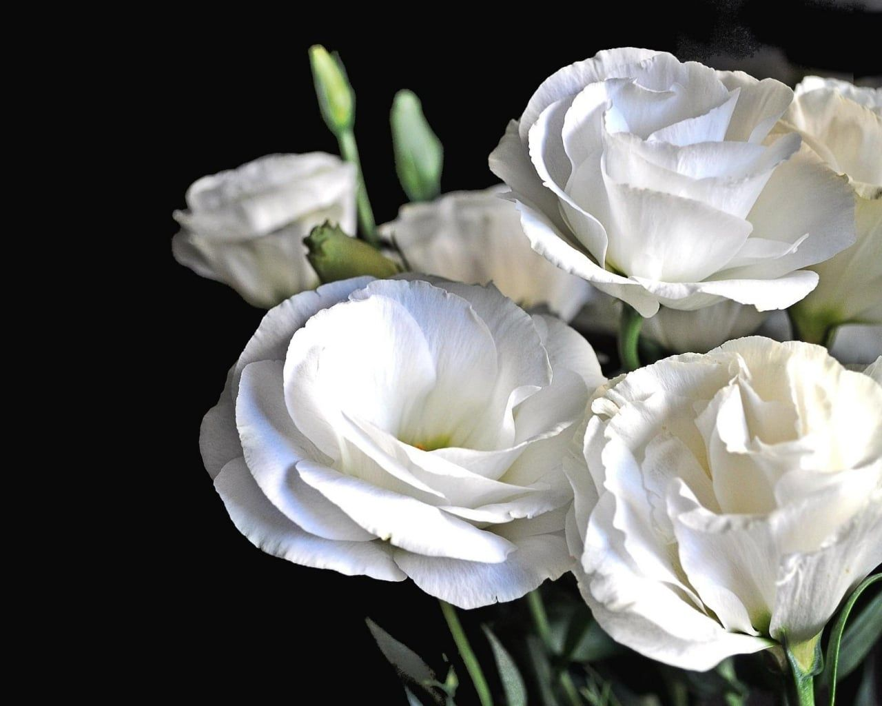 3 Beautiful Alternatives To Roses Flowers Lisianthus Flowers Lisianthus