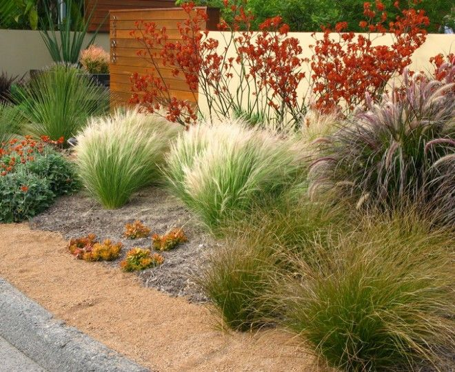 Drought resistant courtyard with fountain drought for Fountain grass landscaping ideas