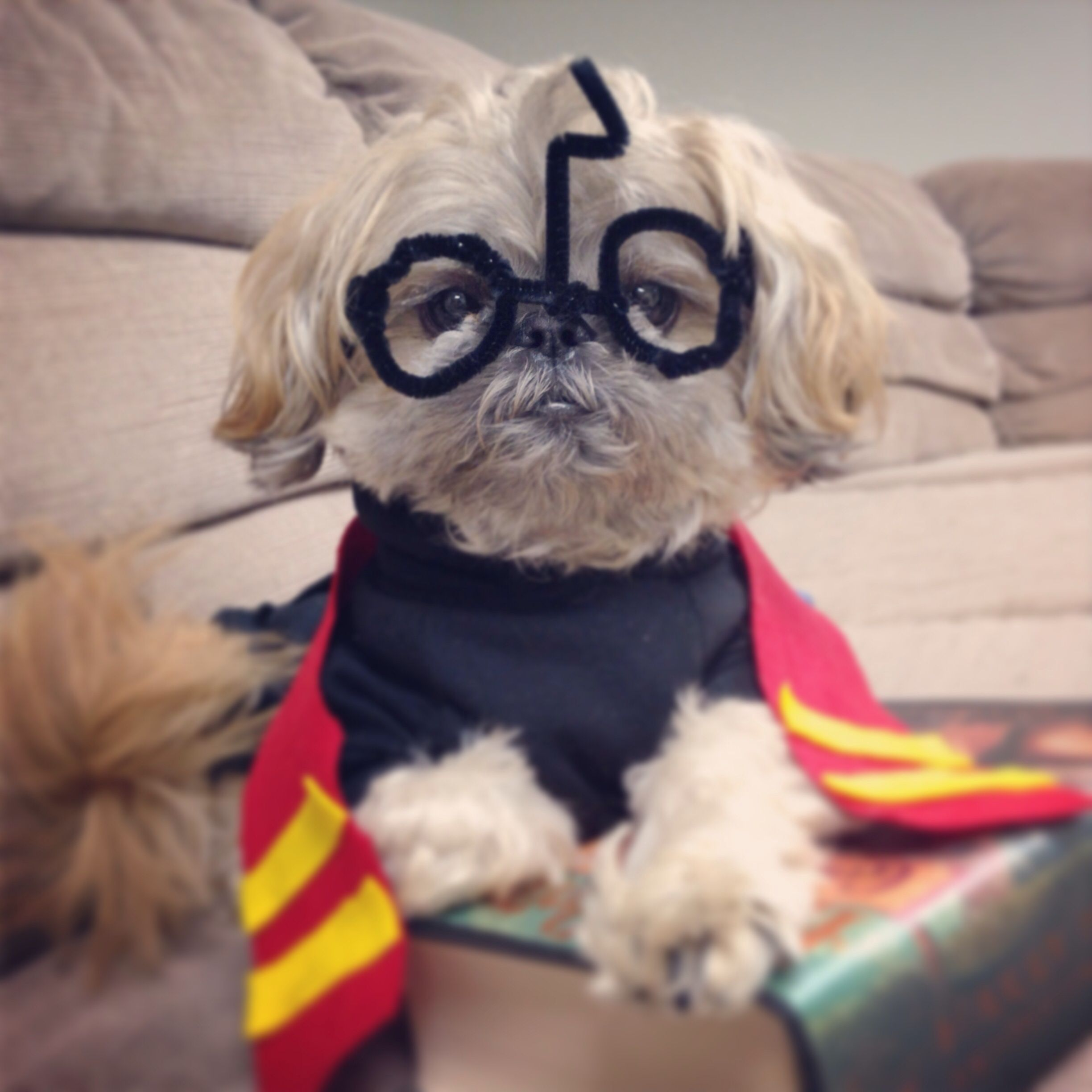 Harry Potter Shih Tzu Costume Dog Halloween Costumes Cute Funny