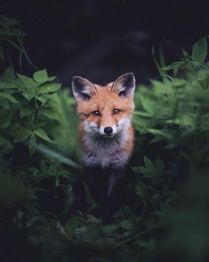 21-Year-Old Photographer Captures Intimate, Soulful Portraits of Wild Forest Animals #bear
