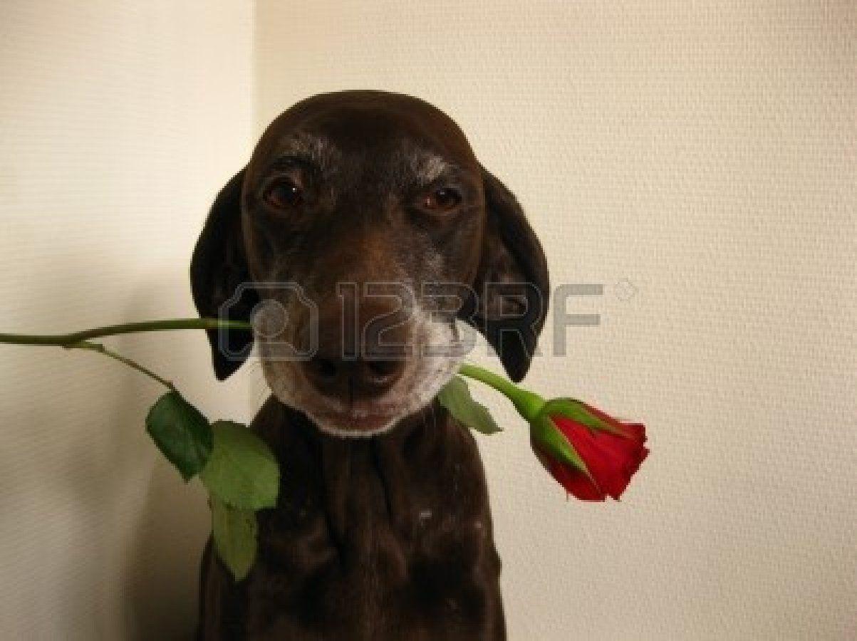 A valentine pointer