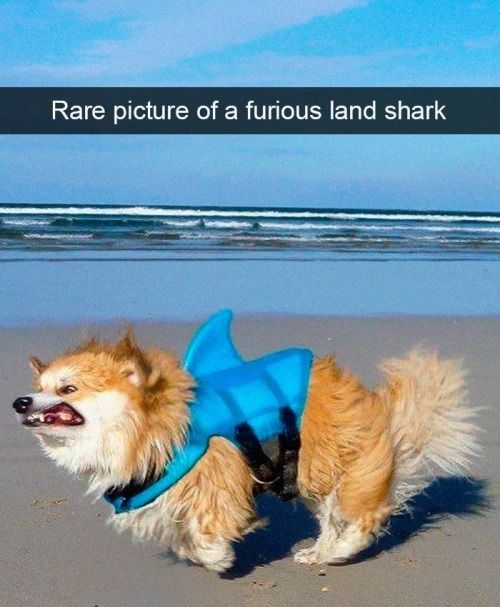 Latest Funny Pets 28 Funny Dogs To Brighten Up Your Day 28 Funny Dogs To Brighten Up Your Day 6