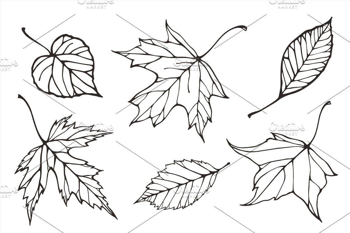 Fall Leaves Patterns Illustrations Leaf Illustration Pattern Illustration Leaf Outline