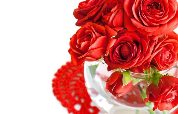 flowers, roses, valentine's day