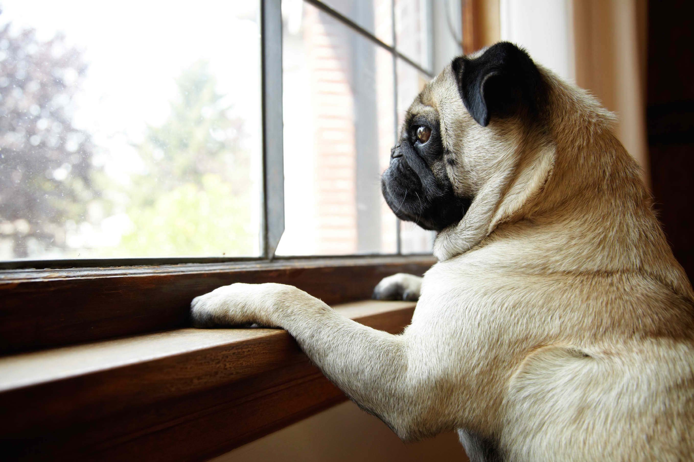 Image result for site:pinterest.com dog with separation anxiety