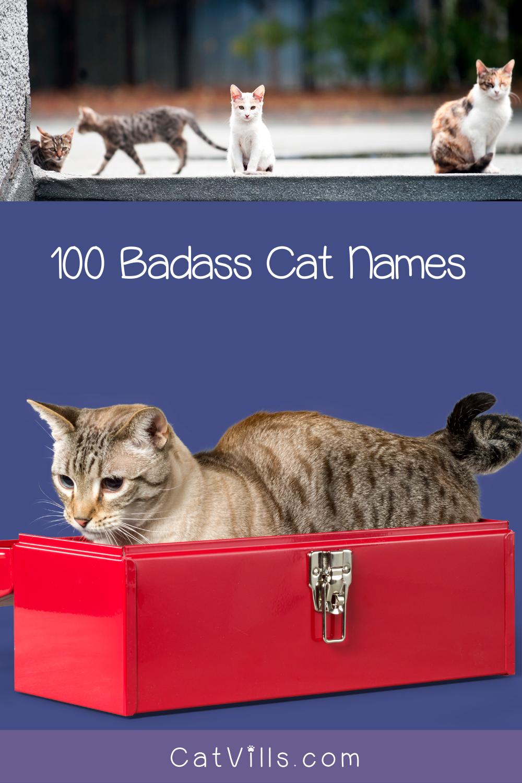 100 Totally Badass Cat Names for Tough Kitties Cat names