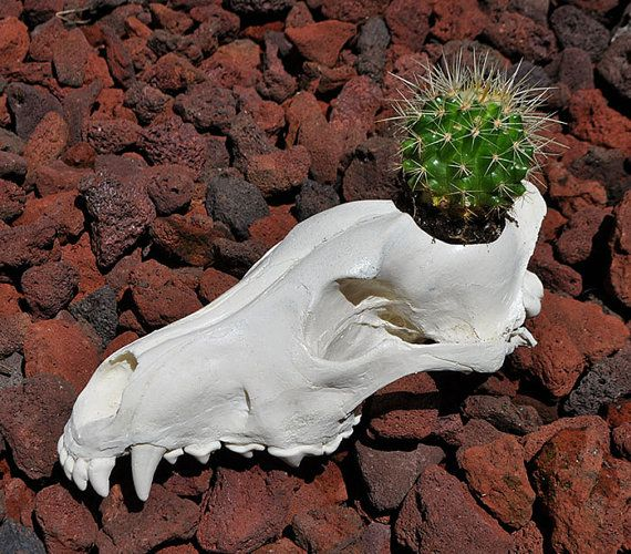 Hey, I found this really awesome Etsy listing at https://www.etsy.com/listing/268376851/beautiful-hand-made-arctic-wolf-skull