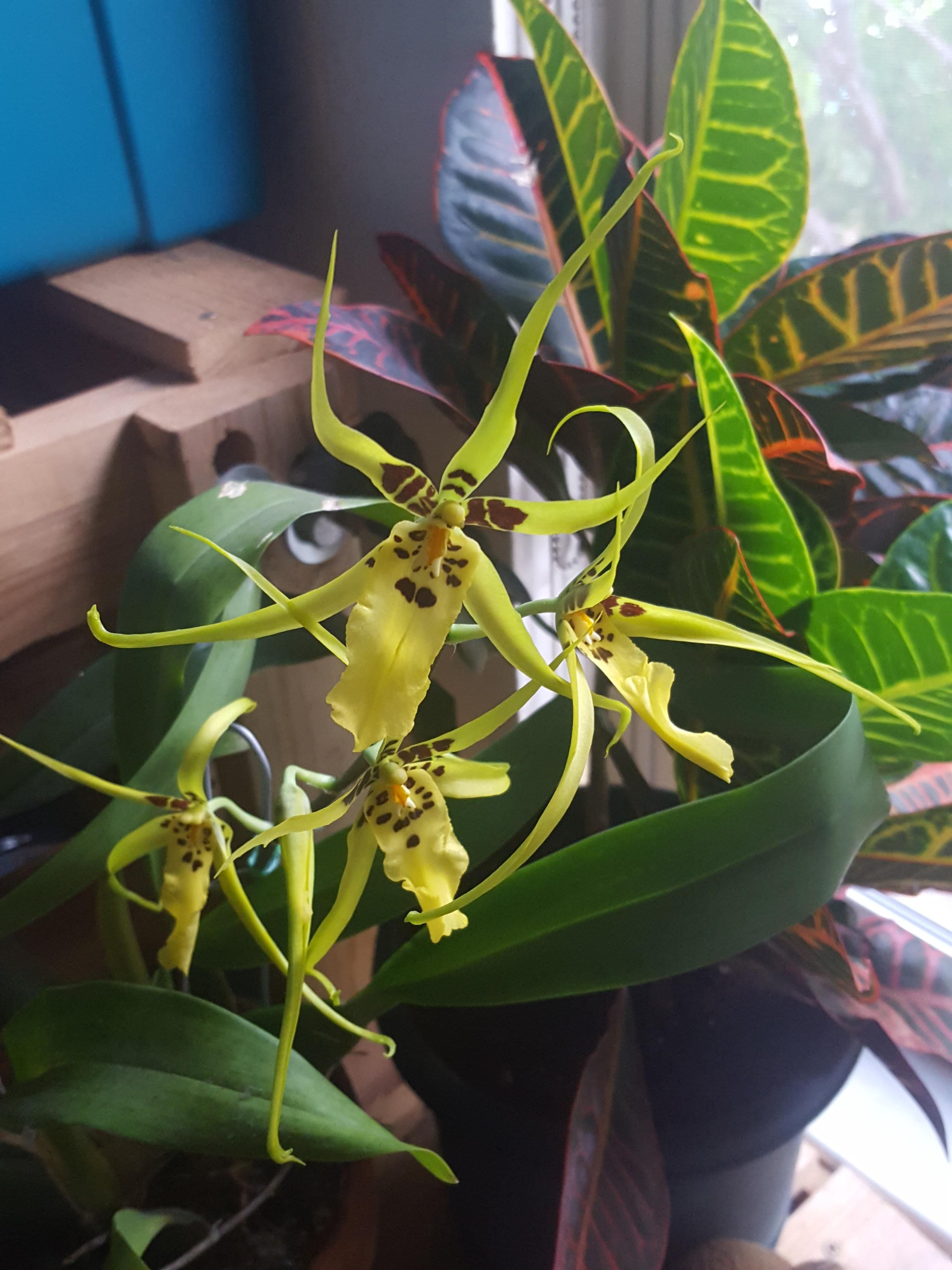 8fb50893227e62c4c0ce9166dedd610f - How To Get An Orchid To Bloom A Second Time