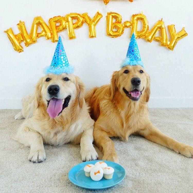 10 Ways To Celebrate Your Dog S Birthday Dog Birthday Happy