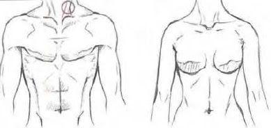Cuerpo-mujer-y-hombre.jpg (389×184)
