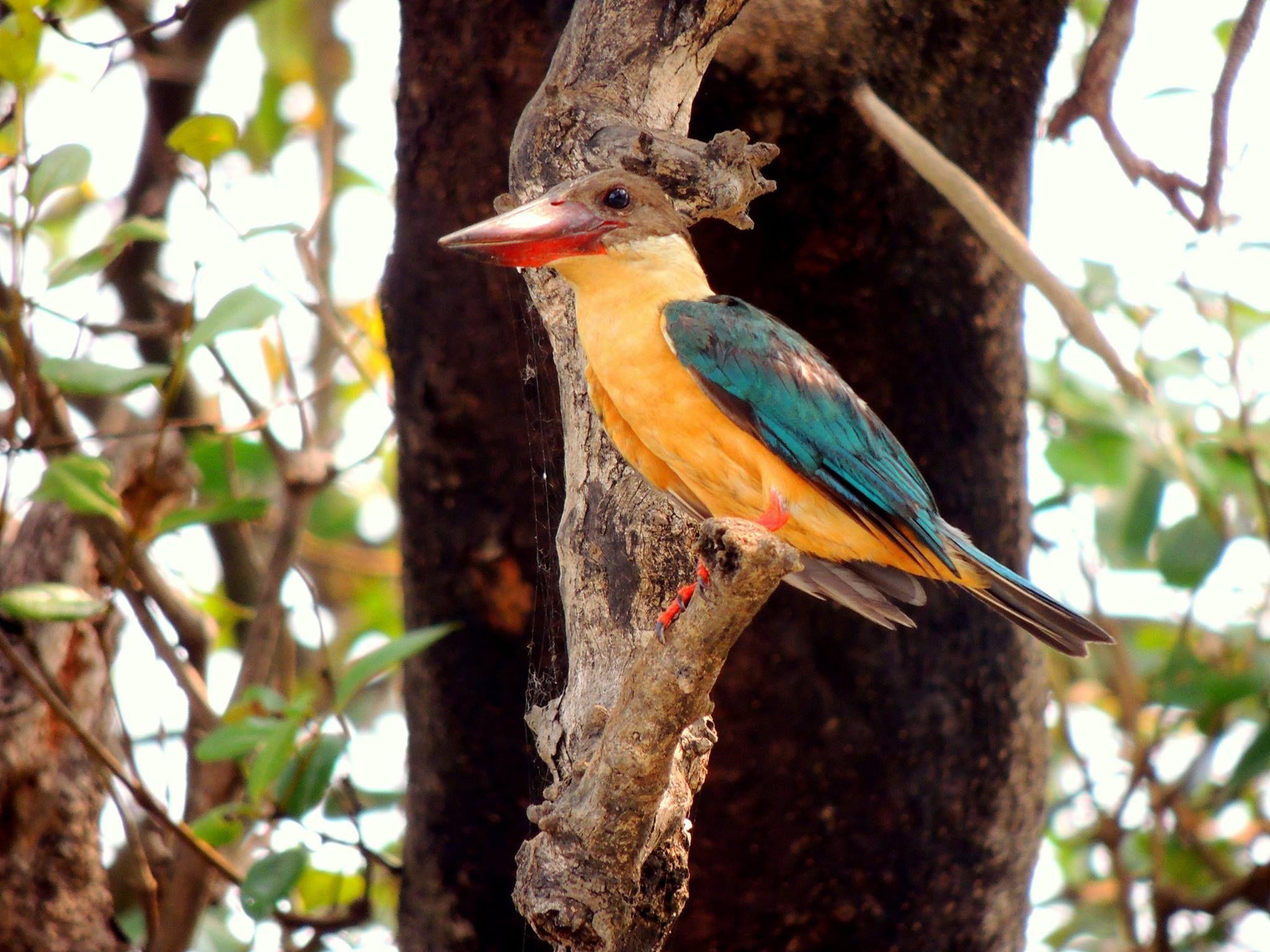 StorkBilled Kingfisher, Mollem Kingfisher, Waterfall