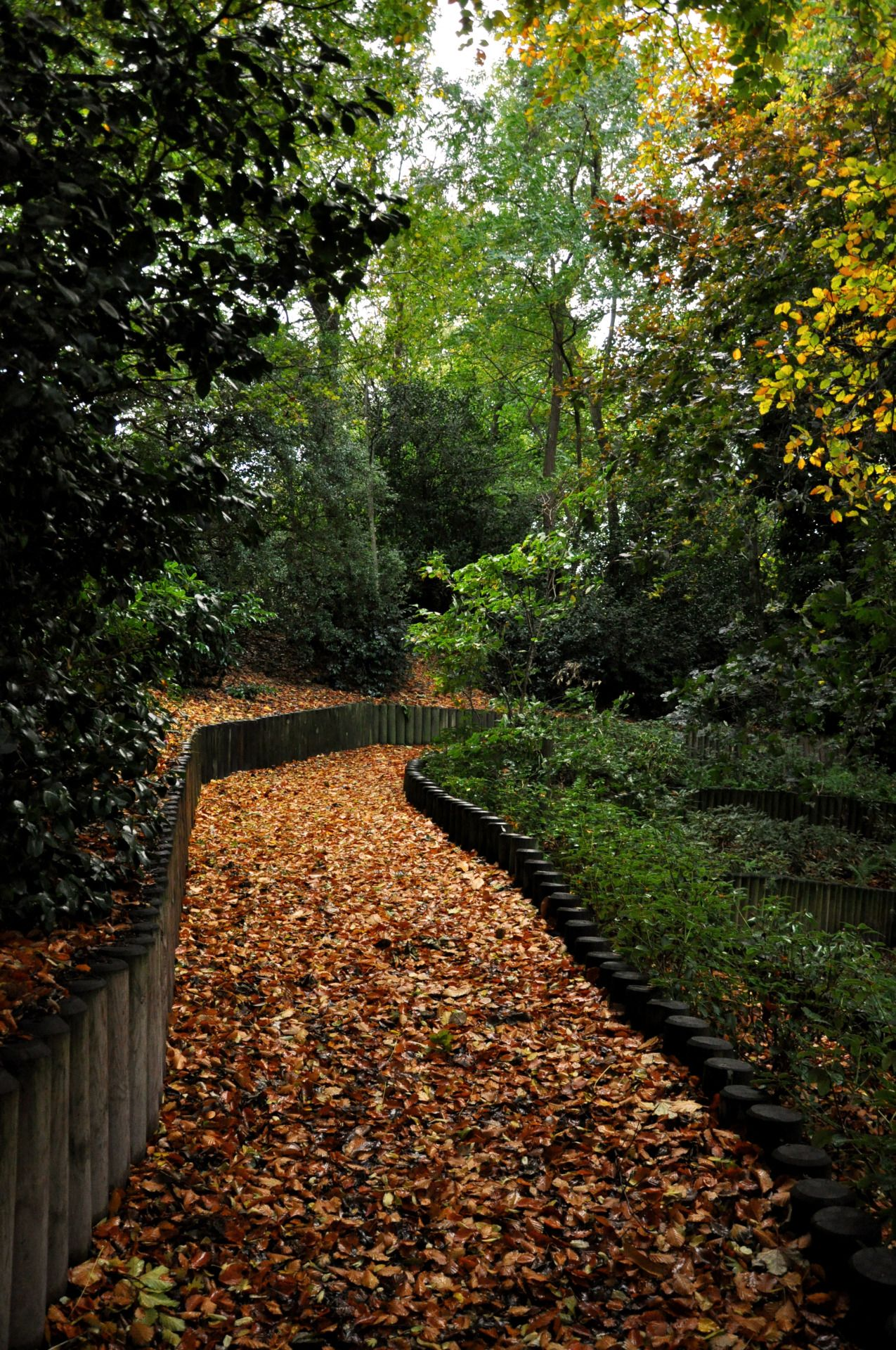 ineedtoconvey:  Autumn is beautiful.