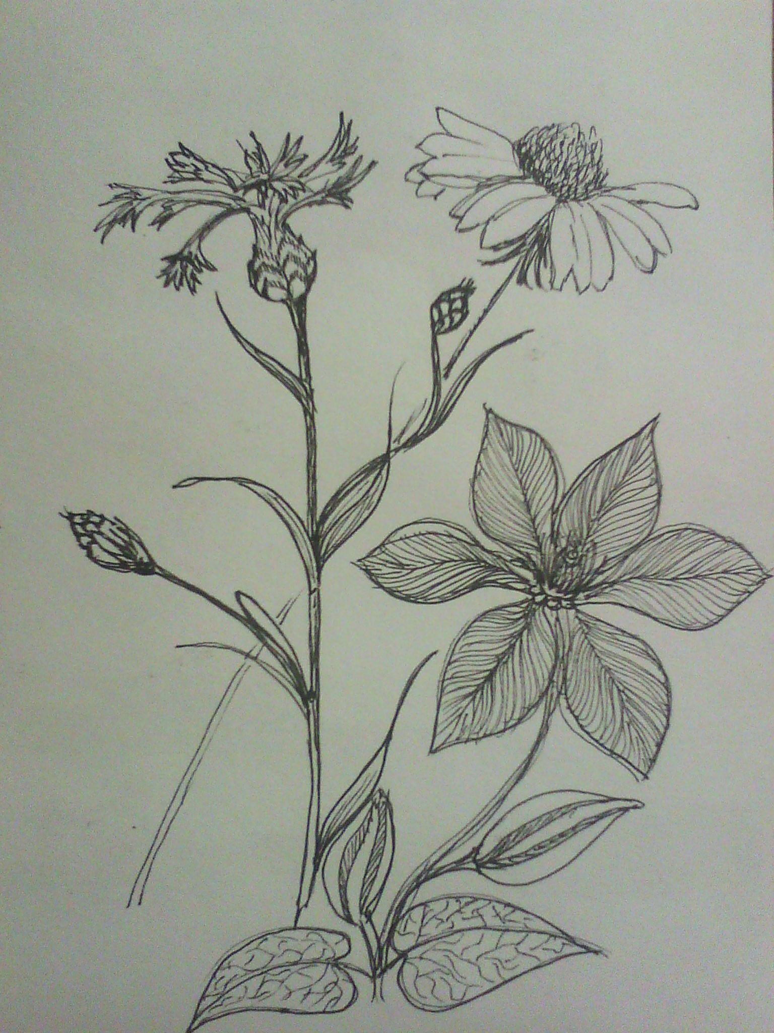 набросок цветы, линер | Цветы, Акварель