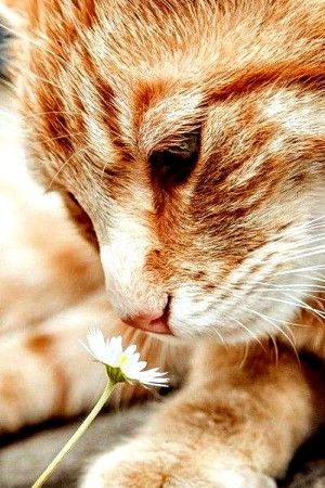 Sniffing the flower