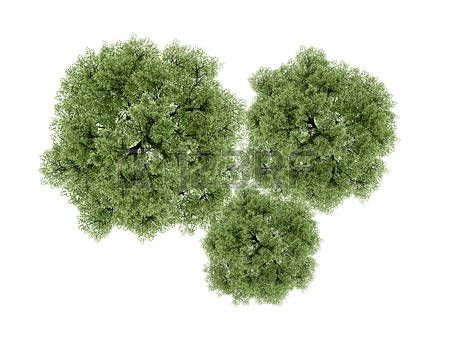 Top Tree Trees Rendered Isolated On White Background Stock Photo Tree Plan Photoshop Tree Photoshop Trees Top View