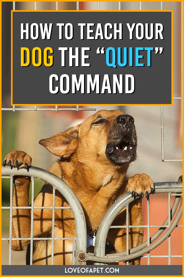 "How to Teach Your Dog the ""Quiet"" Command"