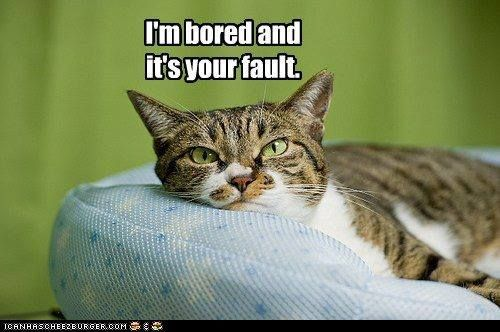 <snort> Are YOUR cats bored? =^..^=