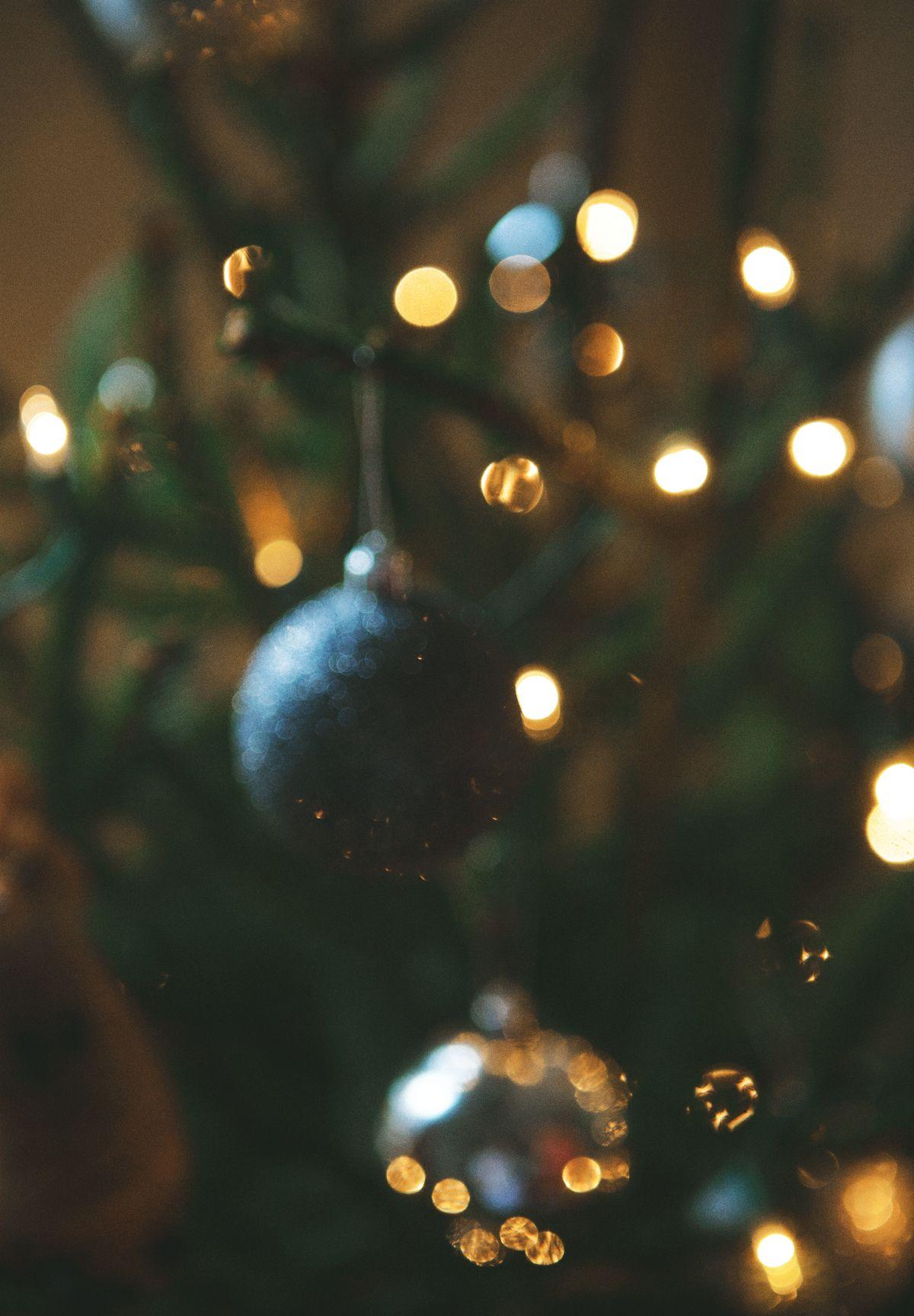 Christmas Tree Hunting Christmas magic, Christmas