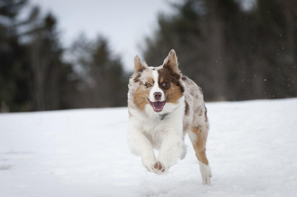 Dogs love snow!