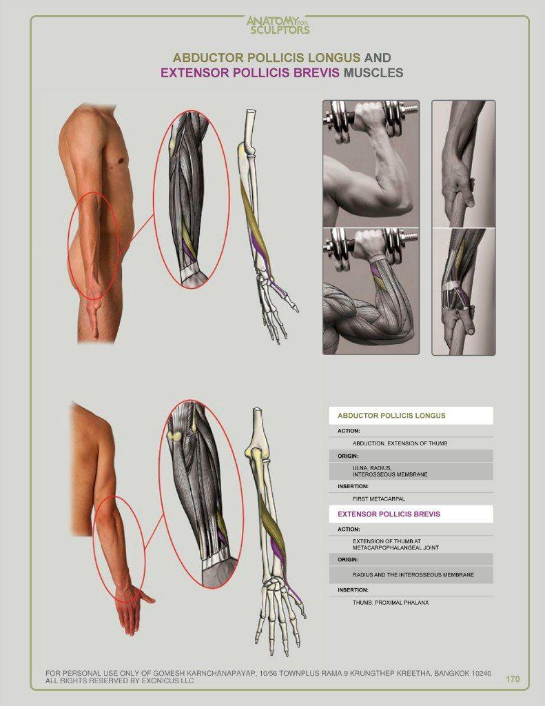 Pin by Patchaya Siripen on Anatomy | Pinterest | Anatomy, Anatomy ...
