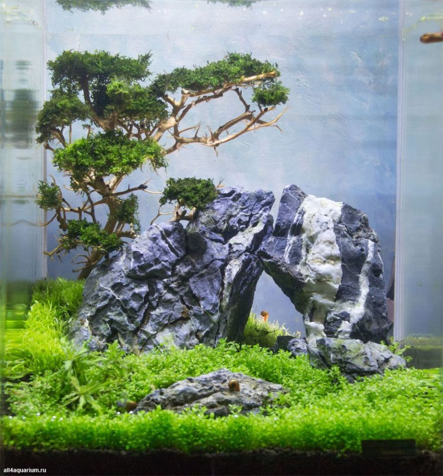 Stunning Aquascape Design Ideas 50 | Aquascape design ...