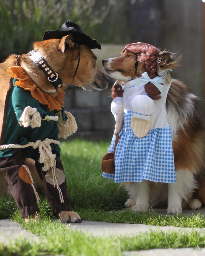 Wizard of Oz dog costumes, scarecrow dog costume, dorothy dog ...