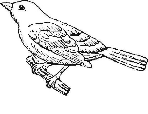 Bird And Nest Coloring Pictures Of A
