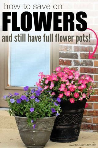 How to save on flowers - Budget Friendly Flower pot ideas