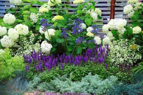 Rabaty z niebieskich kwiatów warto zakładać w niewielkich ogródkach, ponieważ ten kolor tworzy wrażenie głębi i oddalenia.