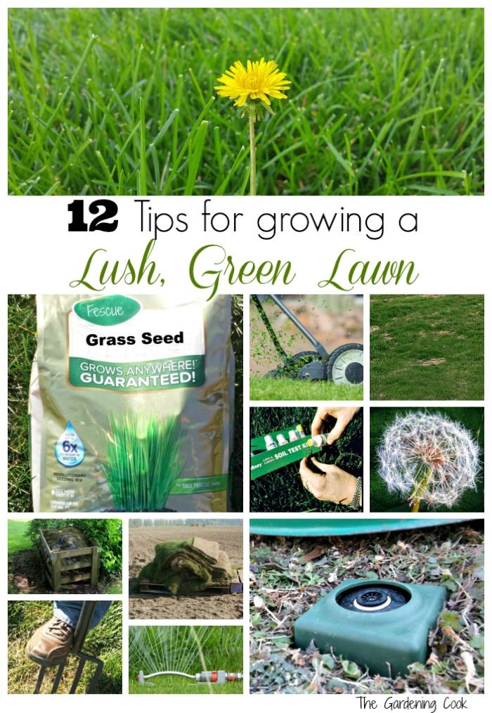 These 12 tips will make sure that your lawn is lush and green all summer long - thegardeningcook.com #sprinklerhelmet #sponsored
